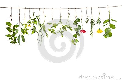 Fresh flovouring herbs and eatable flowers hanging on a string, in front of interieur backgroung
