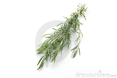 Fresh tarragon on a white background