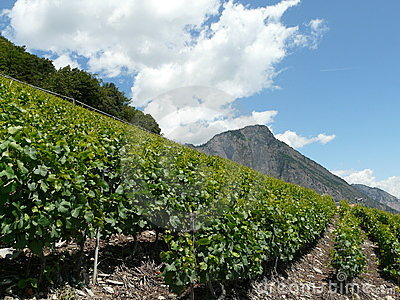 Wine ranks of switzerland saillon
