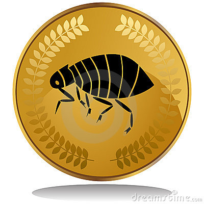 Gold Coin - Flea
