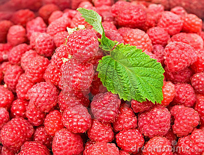 Background of fresh raspberries with the leaves