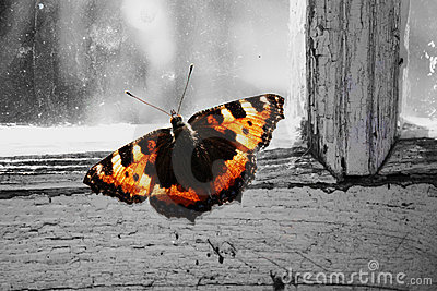 The charming butterfly krapivnitsa  at a window