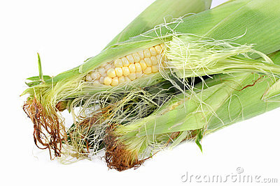 Corn on the Cob with Husks