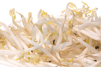 Bean Sprouts Isolated