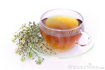 Tea yarrow