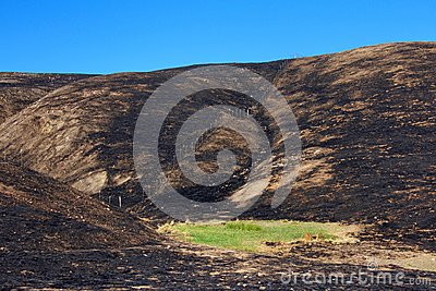 Green grass in the middle of fire charred valley blue sky