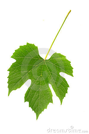 Grapes leaf