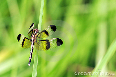 Dragonfly ready to takeoff