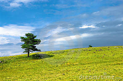 Tree in meadow
