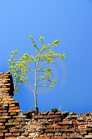 Alone tree on the wall