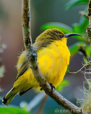 Yellow bird on tree