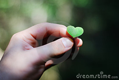 Heart shaped plant in the male hand