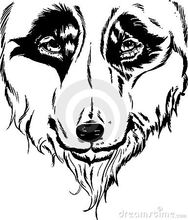 Wolf head portrait illustration
