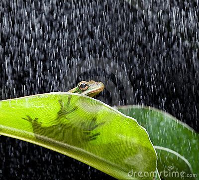 Frog on a rainy day