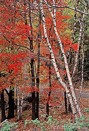 Autumn Woods in Rib Mountain State Park