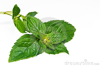 Peppermint branch