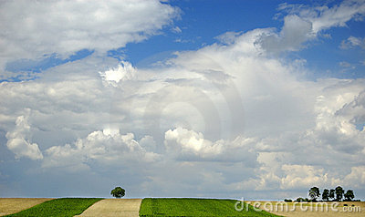 Small tree on the horizon in rural landscape