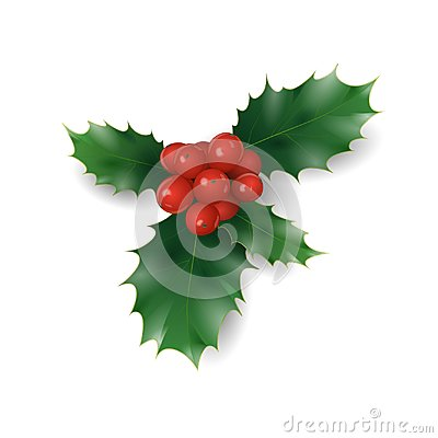 Holly branch with red berries Christmas symbol. Holiday traditional decoration New Year wreath part green leaves