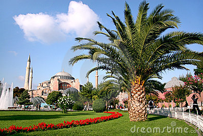Palm tree on Sultanahmet