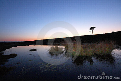 New forest lone tree