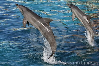 Dolphins Jumping Two