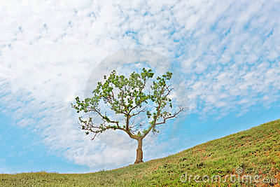 Single tree on blue sky