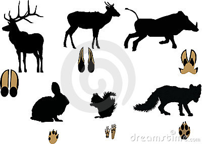 Animals and its tracks isolated on white