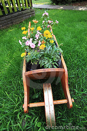 Wheelbarrow full of colorful flowers
