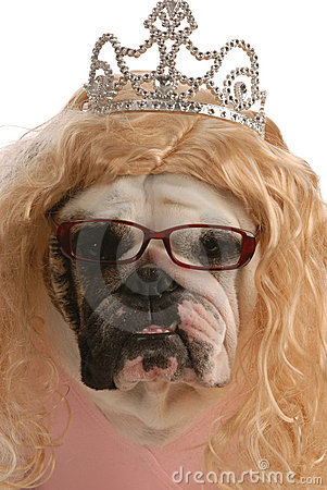 Ugly female dog