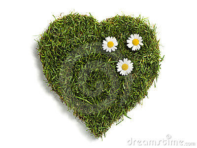 Heart shaped lawn sod with three daisies