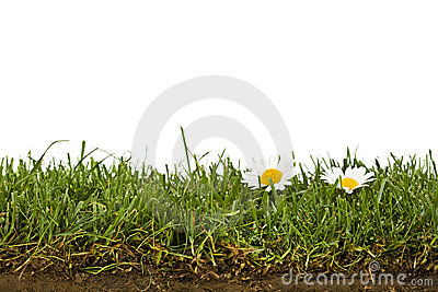 Lawn with daisies and soil cross-section isolated