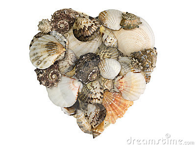 Heart-shaped pile of shells and seasnails
