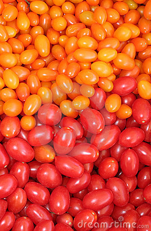 Organic Red and Yellow  Tomatoes