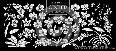 Set of isolated white silhouette orchid in 40 styles .Cute hand drawn flower vector illustration in white plane and no outline.