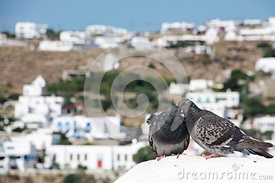 Two lovely pigeons kissing on a white stone