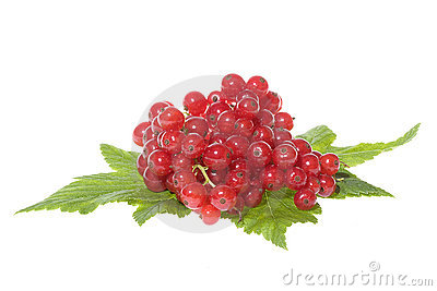 Red currant with leafs