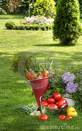Fresh vegetables and plants
