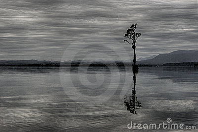 Single tree in Lake Brunner New Zealand