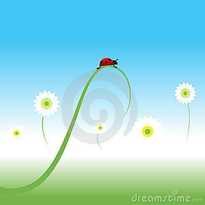 Ladybug, spring background