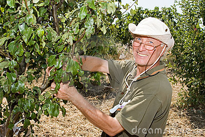 Farmer in an orchard