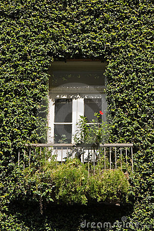 Ivy Covered House Detail