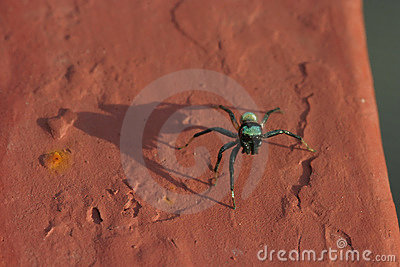 Silvery green spider