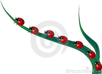Line of ladybirds