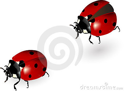 Ladybird in motion