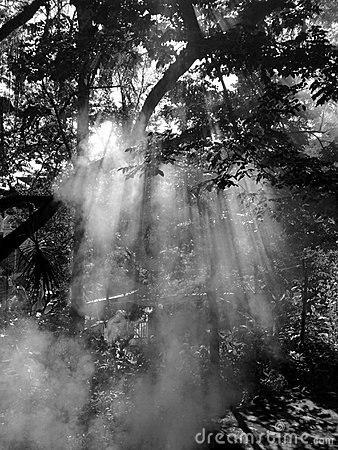 Fog over the branches of the tree