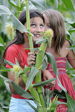 Girls in corn field