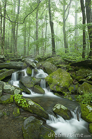 Stream, Spring Landscape, Great Smoky Mtns NP