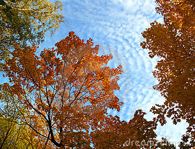 Autumn tree branches under sky