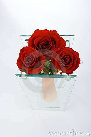 Red bud of roses in the vase