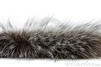 Detailed shot of fur
